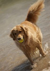Dog playing at Orchid Island Beach