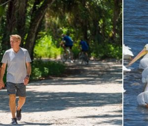 Man and woman on walking trail on the left, rare white pelicans to the right.